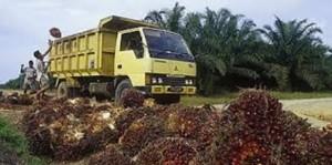 palm-oil1