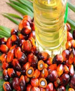 palm-oil2