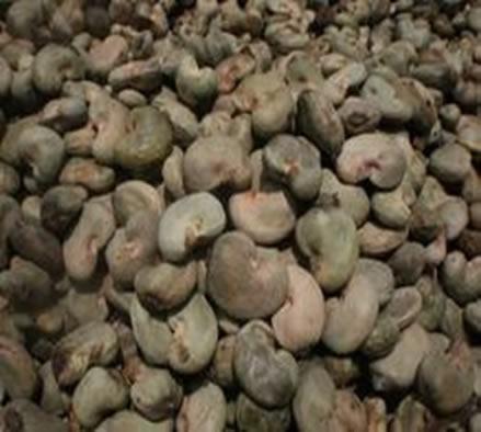 fresh-raw-cashew